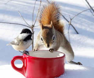 bird, dinner, and cute image