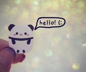 panda, cute, and hello image