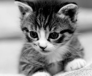 animal, cats, and lovely image