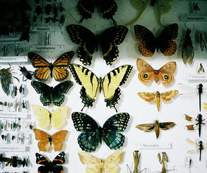 insects and butterflies farfalle image