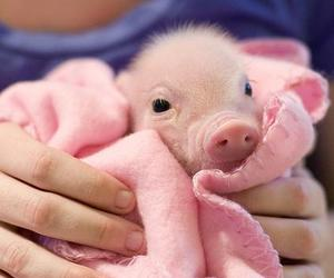 baby, pig, and pink image