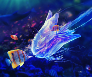 fish, jellyfish, and ocean image