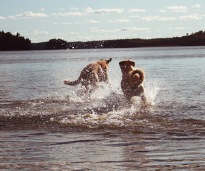 dogs, water, and happiness image
