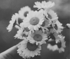 black and white and flowers image