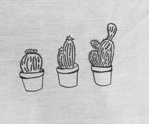 cactus, plants, and drawing image