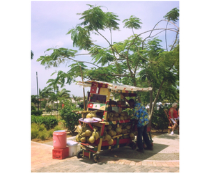 coconuts, jamaica, and travel image