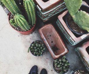 cactus, green, and grunge image