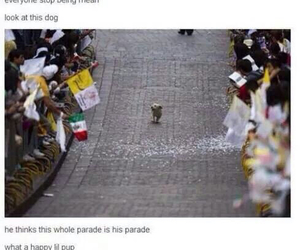 cute, dog, and parade image