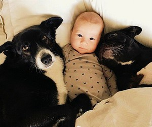 baby, dog, and lovely image