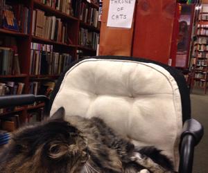 animals, books, and cat image