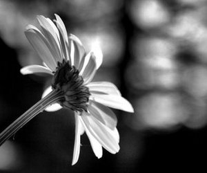 black and white, photography, and summer image