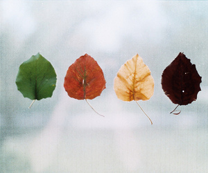 leaves, autumn, and photography image