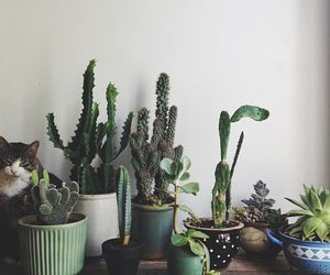 cactus, plants, and cat image