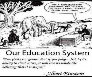 genius, judge, and education system image