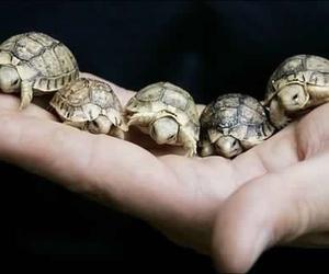 turtle, ninja, and animal image