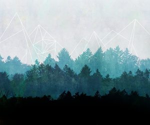 woods, abstract, and forest image