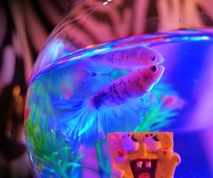 animal, fish, and grunge image