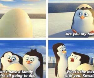 funny, madagascar, and penguin image