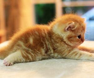 cat image