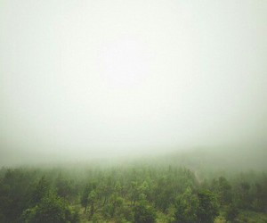 forest, nature, and scenery image