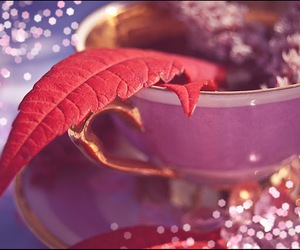 autumn, coffee, and flowers image