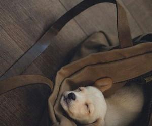 dog, puppy, and мимими image