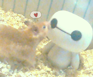 hamster, pet, and true love image