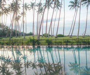 holidays, palm tree, and palm trees image