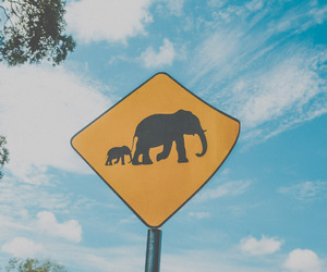 crossing, elephant, and holidays image