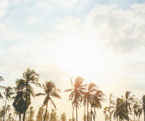 holidays, paradise, and sun shine image