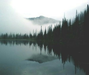 forest, lake, and nature image