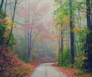 road, tree, and leaves image