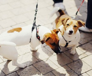 doggies, dogs, and puppies image