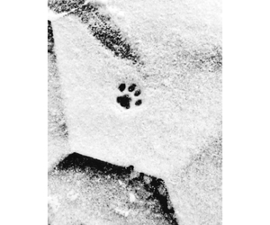 article, blackandwhite, and cat image