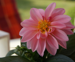 flower, photography, and lovely image