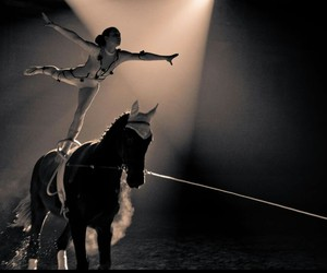 horse and vaulting image