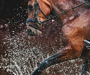 equestrian, horse, and water image