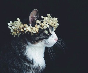 cat, photography, and crown image