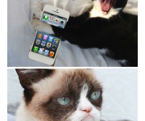 cat, OMG, and dontcare image