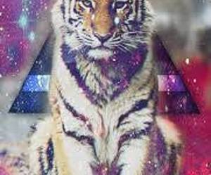 hipster, fondos, and tigres image