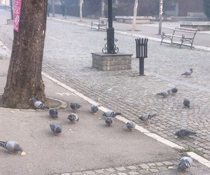 bird, morning, and pigeon image