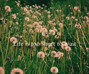 dandelion, life, and wait image