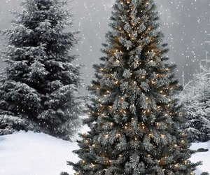 snow, winter, and spruce image