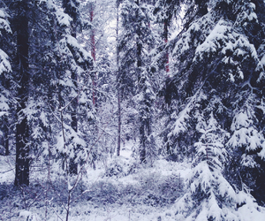 beautiful, forest, and trees image