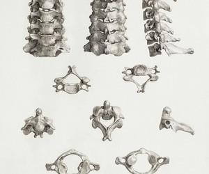 anatomy, study, and biology image