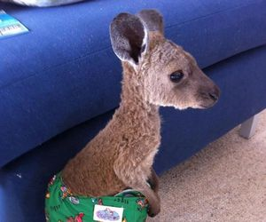 kangaroo, cute, and baby image