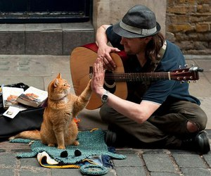 cat, guitar, and man image
