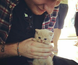 ed sheeran, cute, and cat image