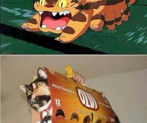 cat, funny, and totoro image