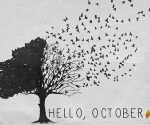 months, meses, and october image